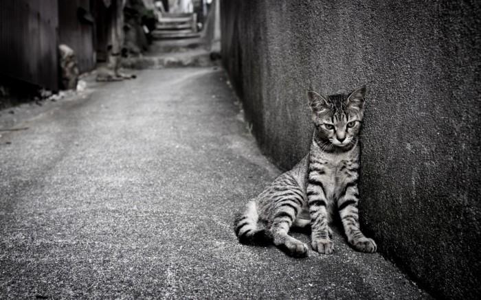 http://www.99hdwallpaper.com/loneliness/cat-street-loneliness-wallpaper.html